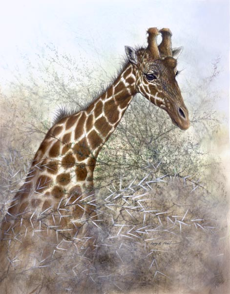 reticulated giraffe by American wildlife artist Larry K. Martin