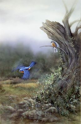 """A Brush of Blue"" Bluebirds"