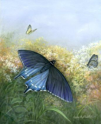 Pipevine Butterfly by American Wildlife artist Larry K Martin